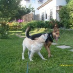 dogs_usadba