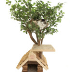 cattreehouse101